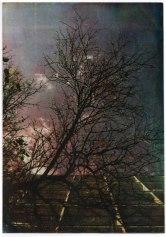 Fotografia em Goma Bicromatada Color / 2013