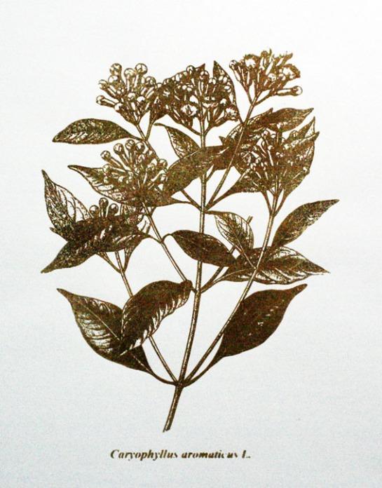 Caryophyllus aromaticus L. / Serigrafia / 60cm x 42 xm / 2010